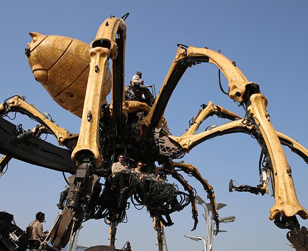 araignée kumo géante