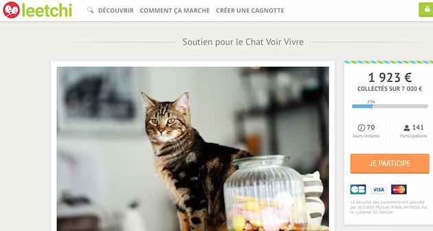 une cagnotte pour sauver le bar chats lillois. Black Bedroom Furniture Sets. Home Design Ideas