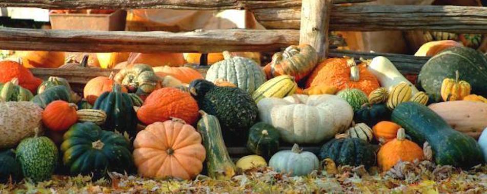 quels sont les fruits et l gumes d 39 automne et o les trouver. Black Bedroom Furniture Sets. Home Design Ideas