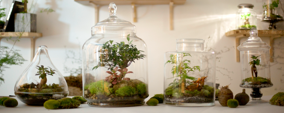 une grande vente ph m re de terrariums dans le 9e. Black Bedroom Furniture Sets. Home Design Ideas