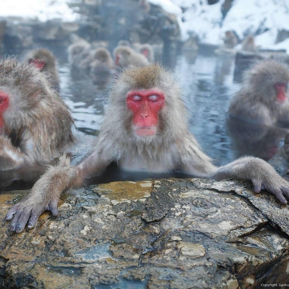 bain chaud-singe
