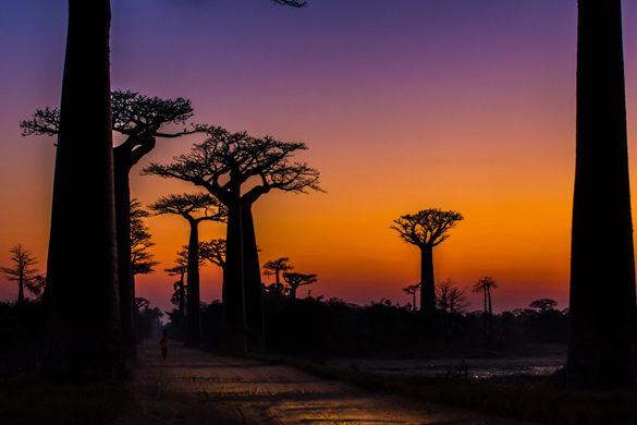 madagascar-baobas