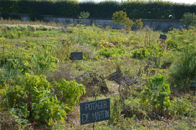 potager-bio-tomato&co-cultures