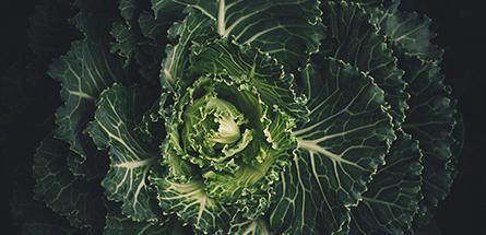Comment manger bio sans se ruiner ?