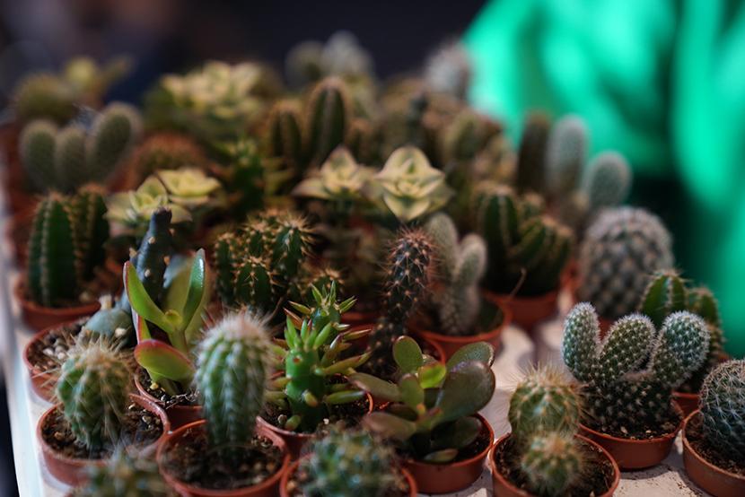 Grande vente de plantes partir de 2 - Voir tous les cactus ...