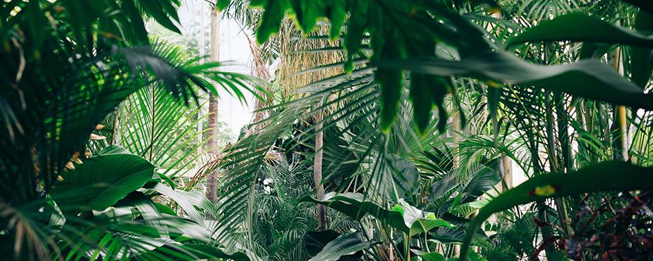 Grande vente de plantes partir de 2 for Plante pour tous