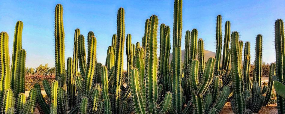 o acheter un cactus paris