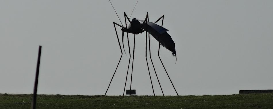 5 remèdes naturels pour faire dégager les moustiques