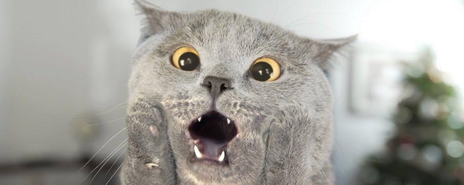 Meowlingual : le gadget qui vous permet de parler avec votre chat