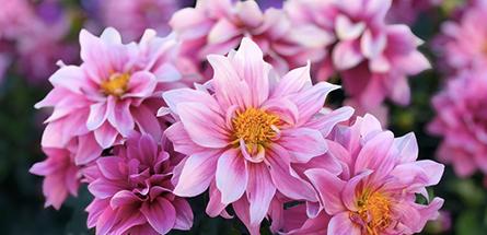 Pourquoi il est urgent de se tourner vers les fleurs bio et locales