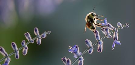 3 gestes simples à adopter en urgence pour sauver les abeilles