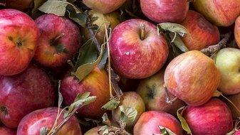Infographie: Les fruits et légumes les plus contaminés par les pesticides