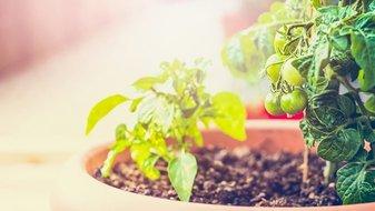 6 légumes insolites à faire pousser chez soi