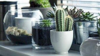 Envie de vivre plus longtemps? Ayez des plantes chez vous!