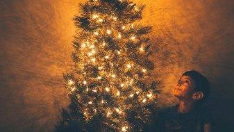 Pour un Noël écolo, un sapin durable qui se replante après les fêtes