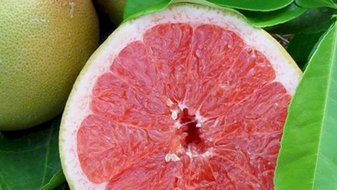 5 aliments originaux pour ne pas tomber malade