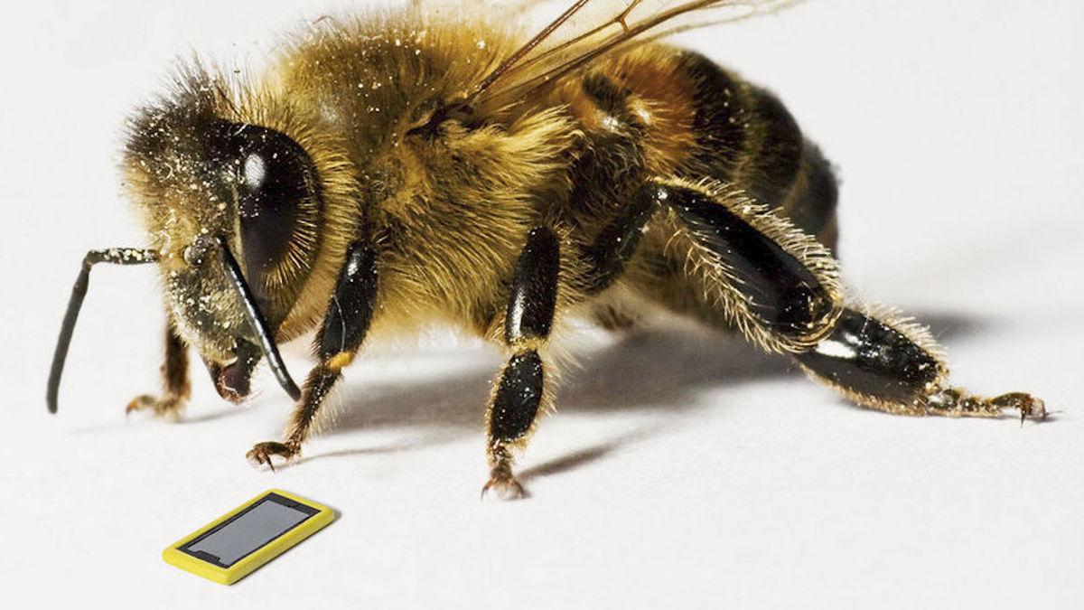 La première abeille influenceuse qui sauve la planète