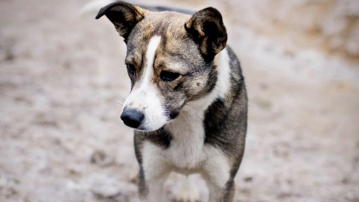 Alerte pépite : un Tinder pour adopter des chiens abandonnés