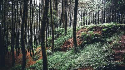 Adopte un arbre pour sauver les forêts!