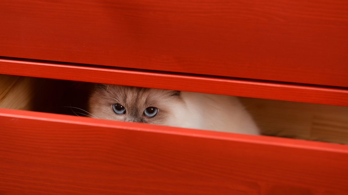 Alerte catlovers : un nouvel escape game avec des chats va ouvrir à Lyon