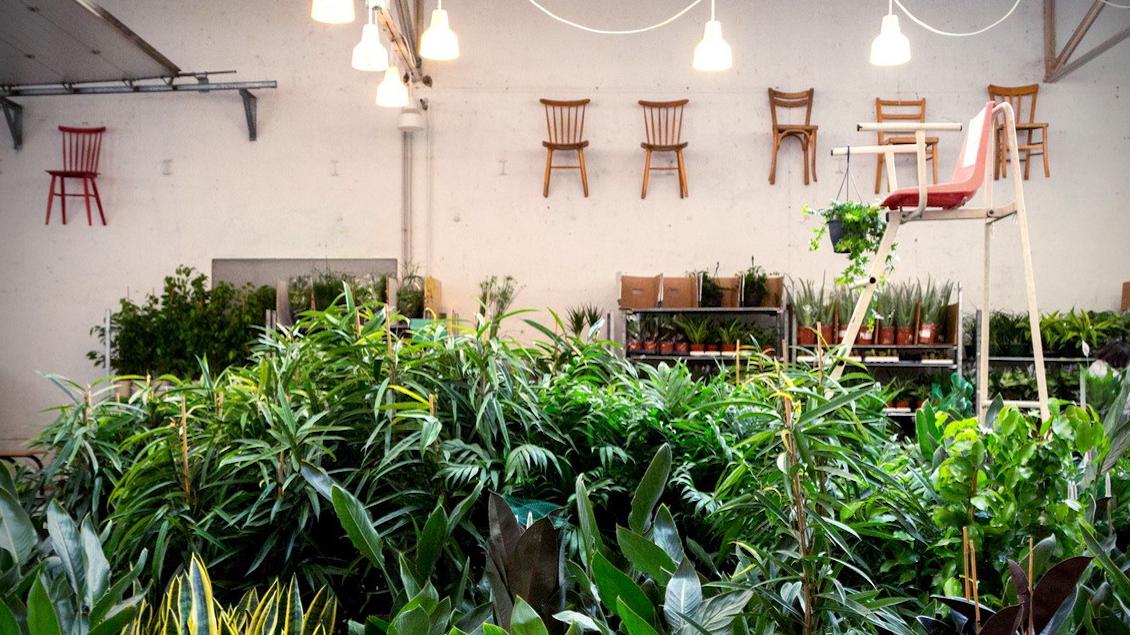 La grande vente éphémère de plantes et aromates à 2€ revient à Lyon