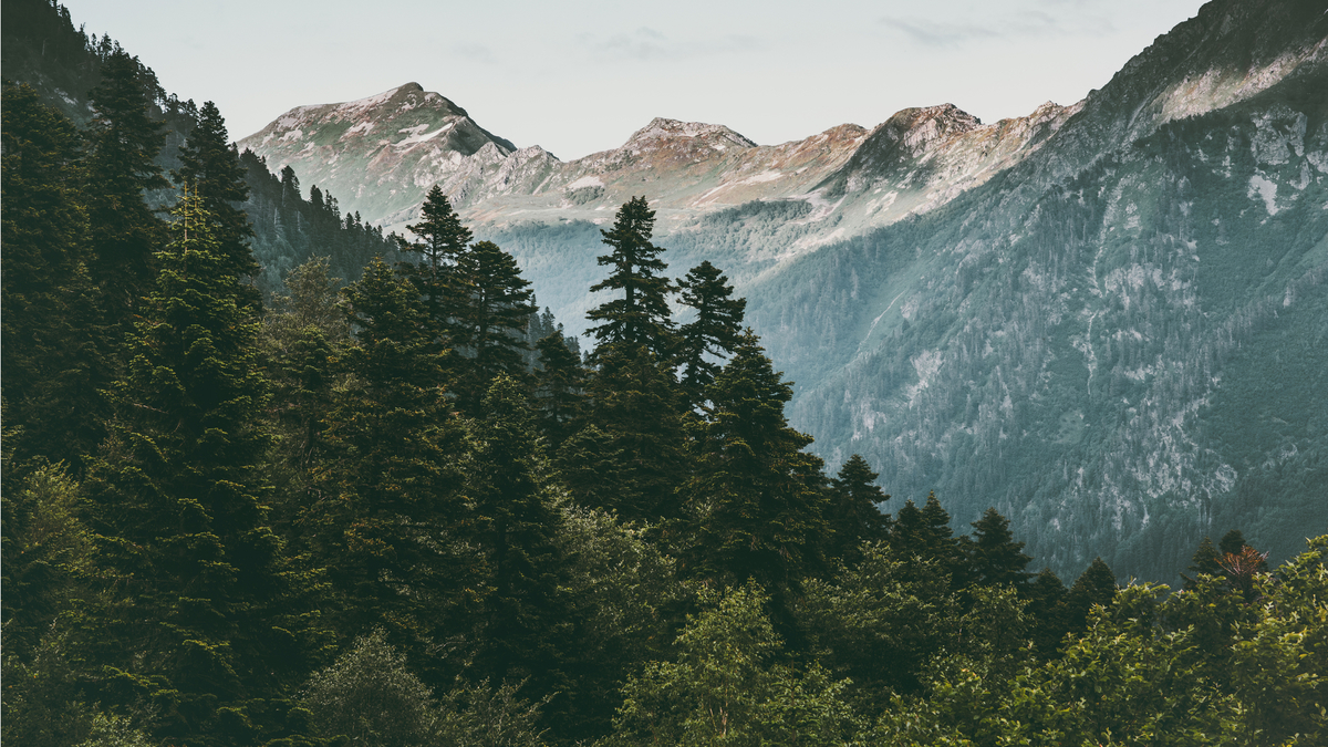 900 000 arbres plantés grâce au premier Téléthon pour le climat