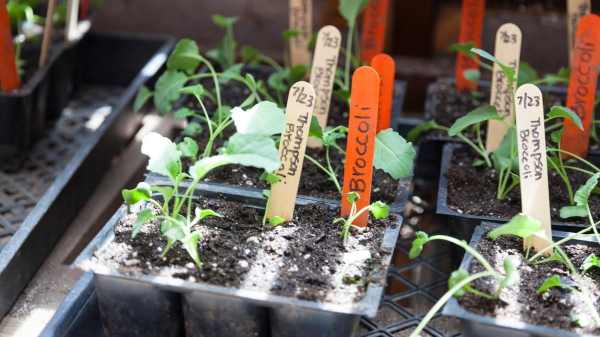 7 activités de jardinage à faire en intérieur pendant le confinement