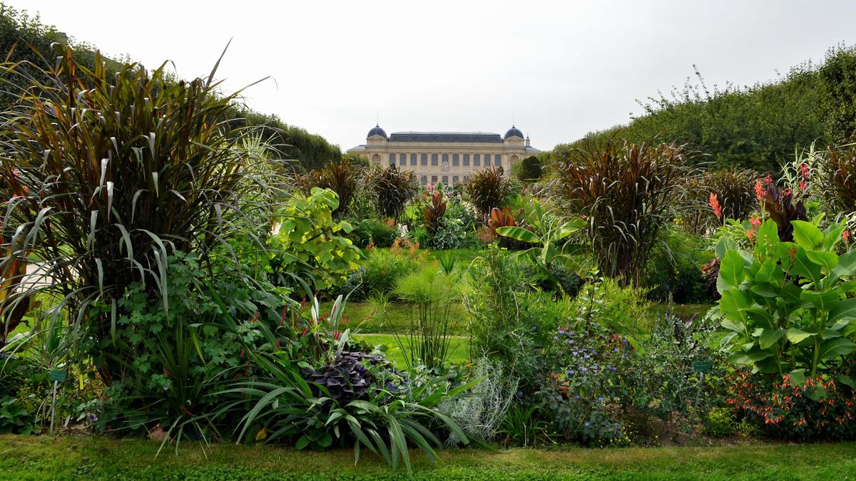 Jardin des Plantes : un immense spectacle son et lumière débarque en plein cœur de Paris