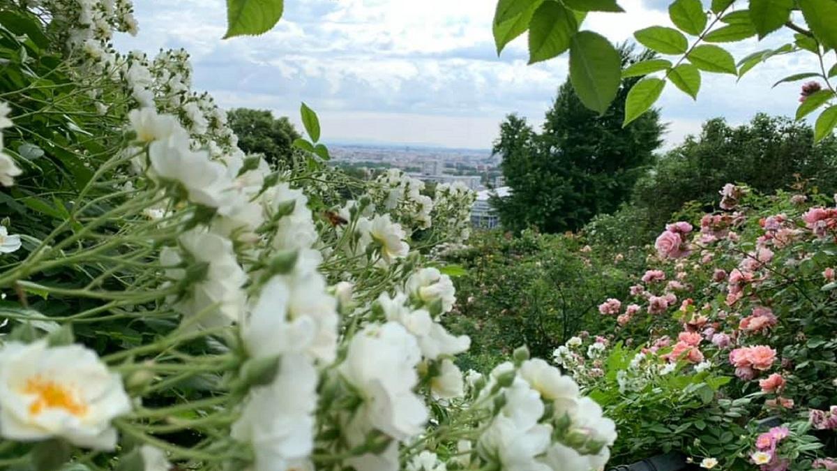 L'une des plus belles collections de roses au monde se trouve près de Lyon !