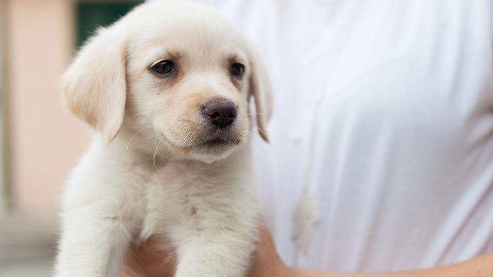 Une association recherche des familles pour accueillir des bébés chiens