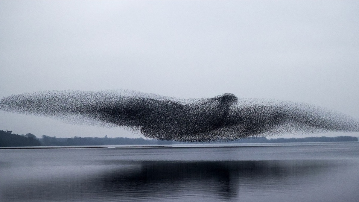 Des étourneaux forment un parfait oiseau géant dans le ciel