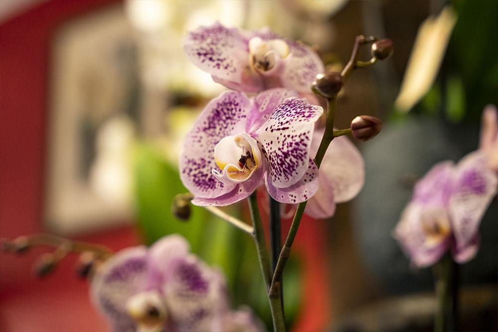 amapola fleuriste paris