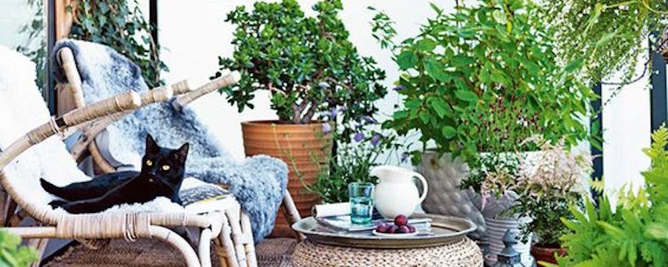 astuces pour ne pas laisser mourir ses plantes et son chat pendant les vacances. Black Bedroom Furniture Sets. Home Design Ideas
