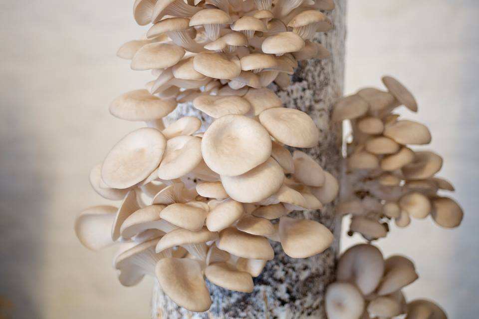 champignons bruxelles