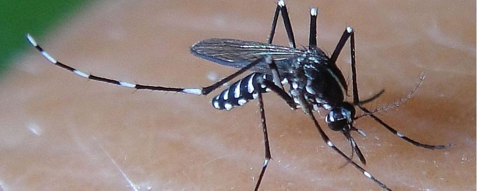 hallelujah une borne anti moustique va tre test e. Black Bedroom Furniture Sets. Home Design Ideas