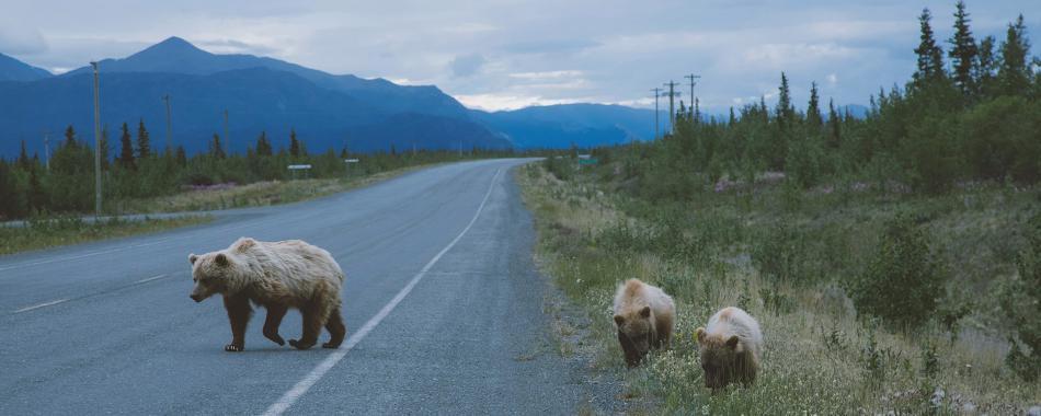 The last Frontier, à la découverte du Canada et de l'Alaska